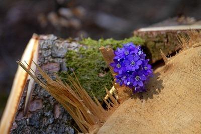 flower-3292818_1280_thumb[1]