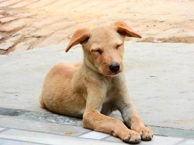 dog-1689148_960_720
