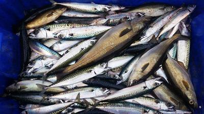 fish-879341_1280